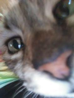 Crazy Cat Lady, Crazy Cats, Cat Emoji, Cat Nose, Friend Anime, Cat Aesthetic, Cat Wall, Cute Funny Animals, Cool Cats