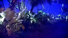 Roop top garden