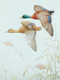 Noel Hubert Hopking (active 1921-1940) Ducks in flight