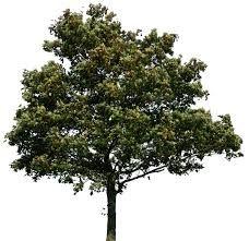 Resultado de imagen para tree photoshop