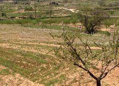 Vista desde la zona de la navarra a la parte Oeste de La Yesa