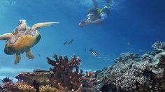 Capturing Camps of Great Barrier Reef: Fantasy Brought to Life Stuff To Do, Things To Do, Walkabout, Stunning Photography, Great Barrier Reef, Snorkeling, Under The Sea, Places To Visit, Australia