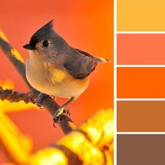 modern interior colors-warm and cheerful yellow and orange colors combined with brown color shades