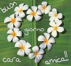 To a good friend Italian Memes, Good Morning All, Day For Night, Disneyland, Italy Quotes, Hearts, Genere, Smile, Horoscope