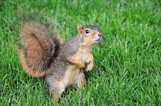 Towson to Assign Squirrels to Incoming Freshmen | Her Campus