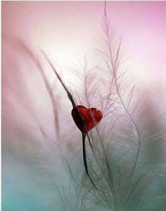 Natural red heart #Love #Heart #Nature www.facebook.com/EssencetoSuccess