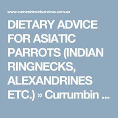 DIETARY ADVICE FOR ASIATIC PARROTS (INDIAN RINGNECKS, ALEXANDRINES ETC.) » Currumbin Valley Birds & Exotic Vetrenarian - Gold Coast