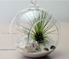 I want one of these Terrariums so bad.
