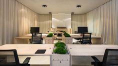 Lublaňské kanceláře s květinami ve stolech dělí dlouhé závěsy