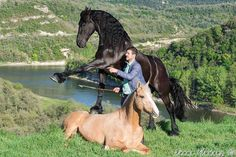 santí serra - Hľadať Googlom Spanish Riding School, Horse Tips, Horse Love, Camping, Horses, Exercises, Chop Saw, Friesian Horse, Animales