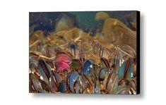 Mussel Shells Marine Biology Life Aquatic by PeggyCollinsPhotoArt