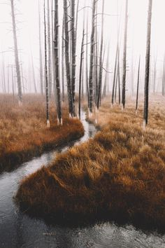 I wandered and wandered and eventually seeped into the stream myself and became a part of the wandering stream.