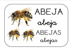 bits lenguaje abeja Blended Learning, Bee, Families, Spanish, Google, Bees, Insects, Animales, Environmental Education