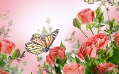 wallpaper: beautiful flower, red rose, butterfly, bokeh, buds ...