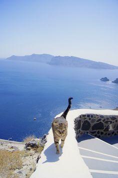 Cat in Santorini - Greece