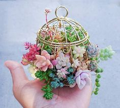 Tiny succulents in mini birdcage.  I'm so obsessed with succy babies. Made this tiny arrangement just to see how long it's going to last. I'm sorry if it looks like I'm abusing the plants. I just want them to stay tiny like this.
