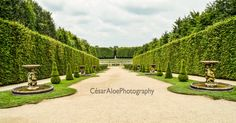 The beauty of the Versailles Gardens is stunning. I was specially inspired by the mix of colors, the cloudy sky and the symmetry given by the plants.