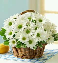 If you want to bring cheerfulness and joy in the life of your sick friend or relative, then you must decorate their room with an astonishing daisy flower basket arrangement. Visit our online flower store to book your order! Happy Flowers, Fresh Flowers, Spring Flowers, White Flowers, Beautiful Flowers, Simply Beautiful, Daisy Love, Daisy Daisy, Flowers Online
