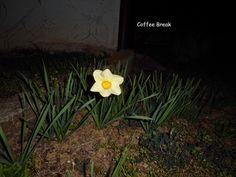 Coffee Break: E' primavera!!!!!!!!!!!!!!!!!!!!!!!!!!#HelloSpring