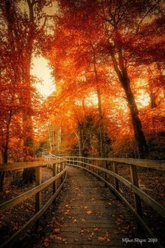 On a wooden walkway through tall trees during fall