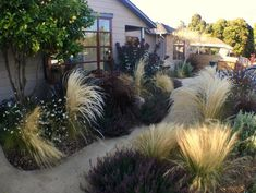 Front Yard With Ornamental Grasses Ornamental Grass Landscape, Ornamental Grasses, House Landscape, Landscape Design, Landscaping A Slope, Pretty Landscapes, Meadow Garden, Garden Spaces, Garden Inspiration