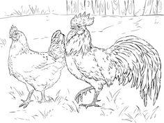 Poule et coq Coloriage