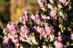 Adapter le jardin au changement climatique: 12 vivaces sans arrosage - Esprit Laïta Planters, Beautiful, Instagram, Solution, Provence, Deco, Cactus, Nature, Medicinal Plants