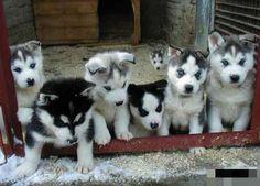 7 Cachorritos, psdt: al fondo hay uno...