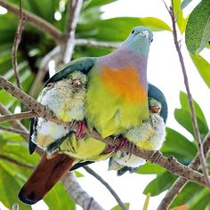 First, how gorgeous is this bird? Second, how cozy do those baby birds look tucked under their mama's wings?