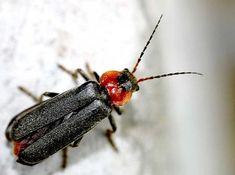 Kiskertünk védelme gyógynövényekkel - Kapanyél Insects