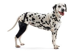 Kruuse Rehab Knee Protector Extra Extra Large Right   Fruugo