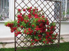 Шпалеры для цветов: полезные советы - Садоводка Decorating Tips, Pergola, Outdoor Structures, Image, Home Decor, Sad, Advice, Gardening, Homemade Home Decor