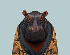 Hippopotamus---Hippopotamus-Amphibius-copia