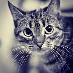 Cat. She. Kitten.