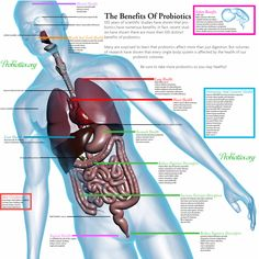 #fightfibro ~ The Benefits Of Probiotics ~ relieves many of my overlapping conditions ~