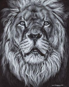 """2,415 Likes, 39 Comments - Sarah Stribbling (@sarahstribblingwildlifeart) on Instagram: """"Just finished my Lion drawing on black paper! I hope you like it, I'm really pleased how it turned…"""""""