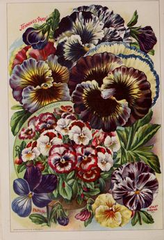 Childs' rare flowers, vegetables, & fruits 1904