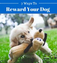 Are you using these to reward your dog? http://www.longlivedog.com/ways-to-reward-your-dog-without-treats/