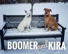 Boomer and Kira.  Our daycare is now open  Monday - Friday  8am - 5:45pm.  Contact us to get your puppers in to have some good times with our friendly staff and our social regulars.  250-521-2275 www.bnrbc.ca 1208 Pine Ave. Trail BC . Sign up online at: http://ift.tt/2EPICrW . #barksnrecbcdaycare #bnrbc #dog #dogdaycare #instadog #dogsofig #dogsofinstagram #trailbc #bc #canada #kootenays #kootenaydog #dogtraining #grooming #cute #dogsmile  #ilovemydog #pet #petservices #petstore…