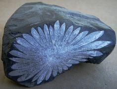 """Chrysanthemum rock"" -- celestite crystals in a limestone matrix."