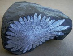 """Chrysanthemum rock"" -- celestite crystals in a limestone matrix."