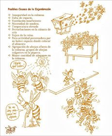 La Familia de la Apicultura - The Beekeeping of Family: Manual Apícola Ilustrado - Beekeeping Illustrated Manual. Drone Bee, Bee Hive Plans, Beekeeping For Beginners, Bee Supplies, Bee Boxes, Royal Jelly, Chamomile Tea, Queen Bees, Bee Keeping