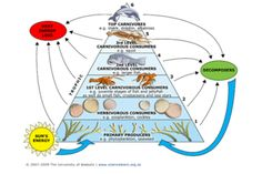 coral reef food chain - Yahoo Search Results Yahoo Image Search Results