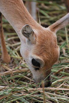 oh deer <3