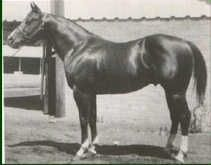 Doc Bar was foaled in 1956. In 1962, Dr. and Mrs. Stephen Jensen purchased Doc Bar from his breeders, Tom and Jack Finley. At 14.3, 1,000 pounds, Doc Bar was a washout on the race track. He wasn't even a performance horse, but he turned out to be a good halter horse and an extraordinary sire whose get totally transformed the sport of cutting. Although he was never ridden in competition, his sons and daughters forever changed the cutting horse industry with their ability and style. flyinv72…