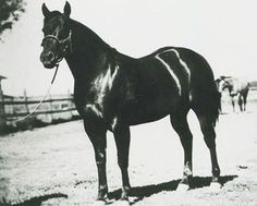 Foaled in 1944, Poco Bueno was by King P-234 and out of Miss Taylor. The plain brown colt did not possess his sire's regal blood bay color, and he was a late bloomer.  In October of 1945, Hankins loaded the colt and some other horses, and hauled them to San Angelo, Texas. E. Paul Waggoner of the Waggoner Ranch bought the brown yearling for $5,700.