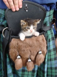 So this is what the traditional kilt sporran is for..... to hold and/or carry the traditional baby kitten. Nice goin' Highland Men - you rock! Crazy Cat Lady, Crazy Cats, I Love Cats, Cute Cats, Baby Animals, Cute Animals, Wild Animals, Kittens Cutest, Cats And Kittens