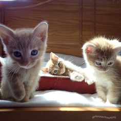 How precious are these three little kittens. Play time all the time.