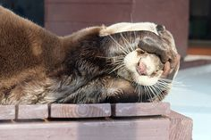 Otter is in denial about it being Monday - April 3, 2017