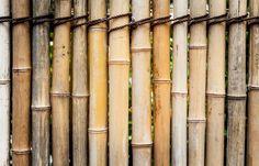 Bamboo wall - null